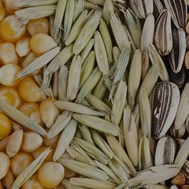Seed Processing Solutions